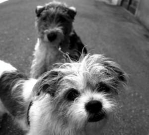 Los-perros-ven-en-blanco-y-negro-1