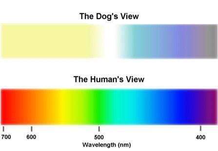 Los-perros-ven-en-blanco-y-negro-2