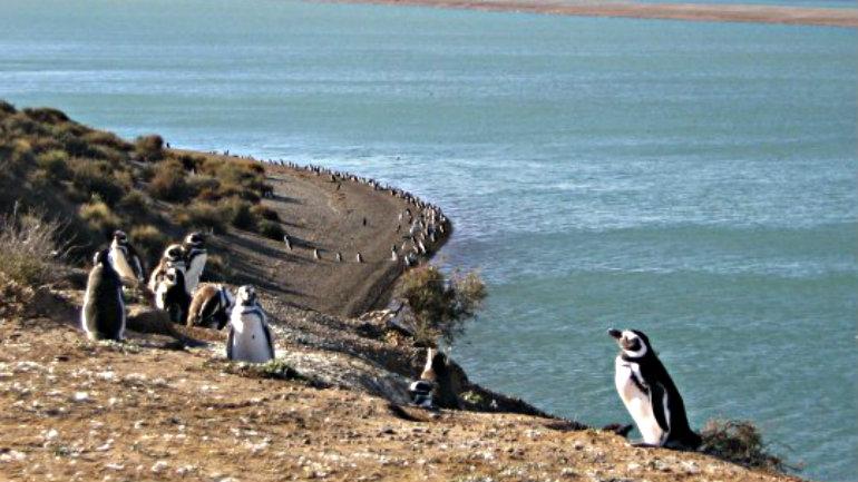 pinguinos-540x372