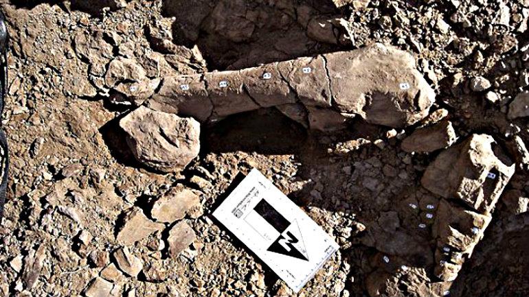 Fósiles-de-dinosaurios-más-grande-de-Chile-540x372