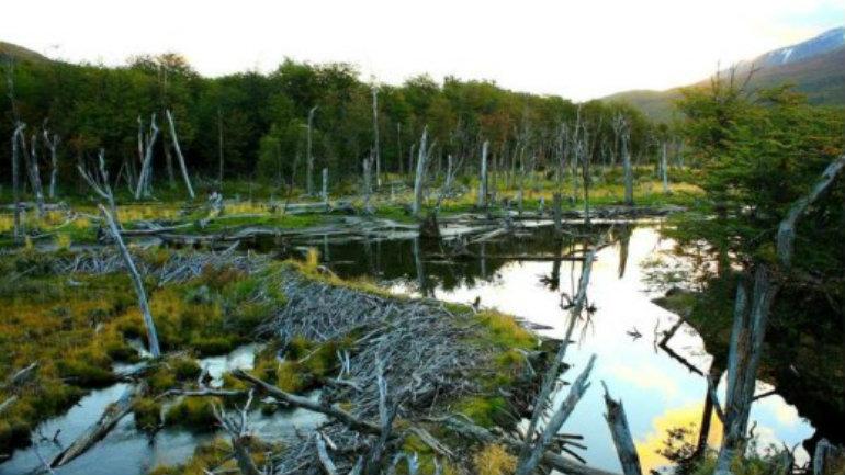 Tierra-del-Fuego-National-Park-Ushuaia-540x372