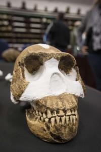 Cráneo de 'Homo naledi'.AFP