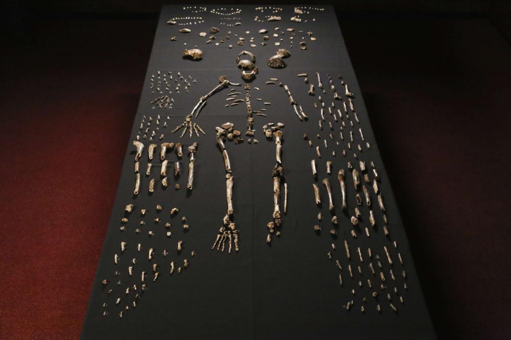 Esqueleto de 'Homo naledi'.AFP