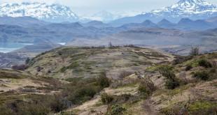 Torres-del-Paine-sector-laguna-amarga-norte