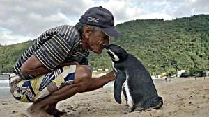 pereira-pinguino_xoptimizadax--620x349