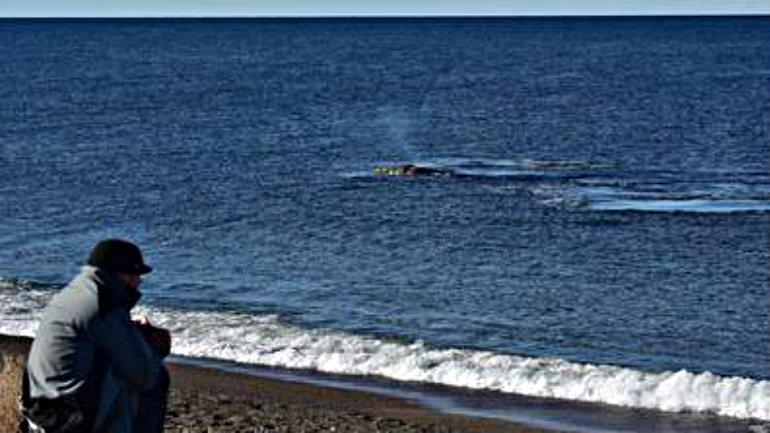 temporada-ballenas-playa-Doradillo-Chubut_CLAIMA20160611_0160_17