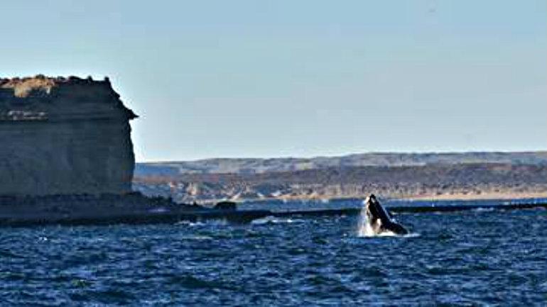 temporada-ballenas-playa-Doradillo-Chubut_CLAIMA20160611_0162_17