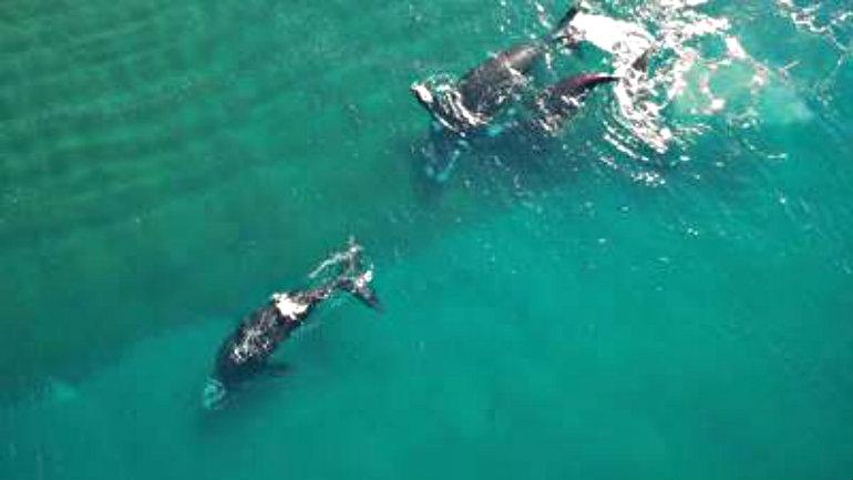 temporada-ballenas-playa-Doradillo-Chubut_CLAIMA20160611_0164_17